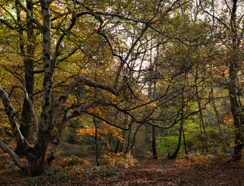 Landowners offered grants for creating new woodlands