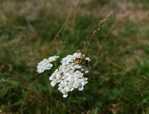 Banning pesticides from UK gardens will slow insect decline