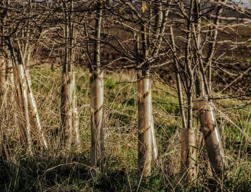 How rewilding could benefit employment