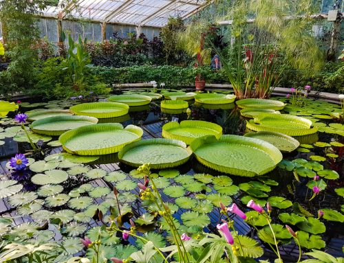 Kew Gardens in Guinness World Records with new record